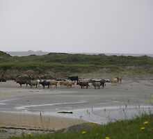 Nude Bathers, Innisfree Island off Donegal Ireland by mikequigley