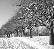 Winter by RSMphotography