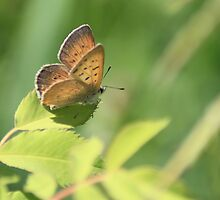 Precious Butterfly by EyelightsPhoto