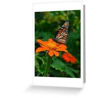 Monarch in Orange Greeting Card
