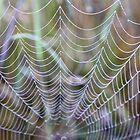 Web of a Different Kind by John Butler