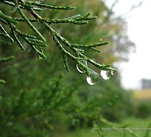 Three Drops by ingridthecrafty