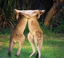 Roo Fight! by MiloAddict