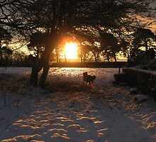 Saviour in the Sun by mairead62