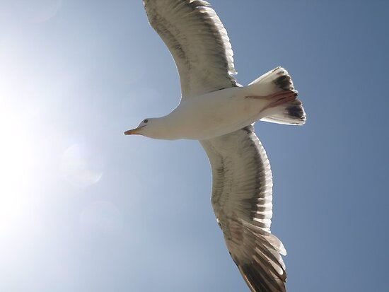 Seagull by fairbro1994