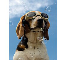 Hound amongst the bubbles Photographic Print