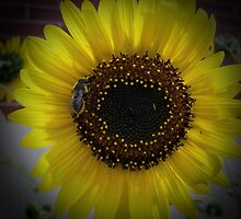 Sunflower bumble Bee 01 by mdkgraphics