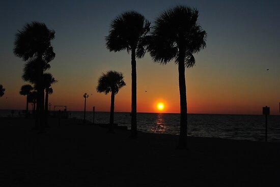 Beach at Dawn in Florida by Bill Colman