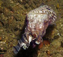 Cuttlefish Dining by Edjamen