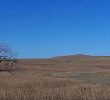 Tall Grass Prairie, Flint Hills KS by Lucy Albert