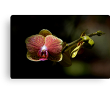 Leu Gardens Orchid Canvas Print