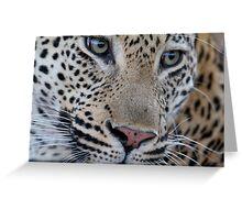 Leopard - Mxabene Male Greeting Card