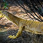 Big Yellow Lizard by Paul Barralet