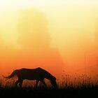 10.8.2011: Sweet Sunrise by Petri Volanen