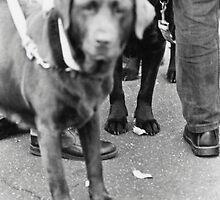 dog at rally by jacksme