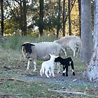 Baby Lambs by louisegreen