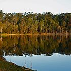 Reflections at Lake Samsonvale by Sea-Change