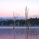 Misty Morning -Moogerah Dam by Beth  Wode