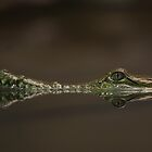 Reflection of a Crocodile by Paul Pegler
