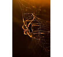 Hanging On Photographic Print