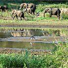 WILDERNESS MAGICAL MOMENTS - The Kruger National Park  by Magaret Meintjes