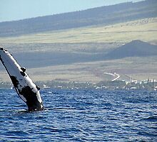 Pectoral Fin of a Whale in Maui by Callie Smith