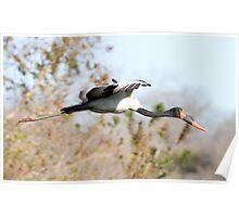 Saddle-billed Stork Poster