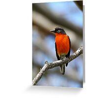Flame Robin - Male Greeting Card