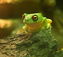 Lil' Green Tree Frog by Paula McManus
