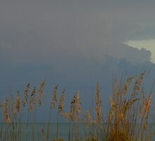 Sea Oats & storm-clouds {Sanibel Skyscape No.8} by WonderlandGlass