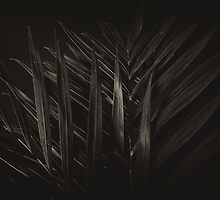Fronds by Lee LaFontaine