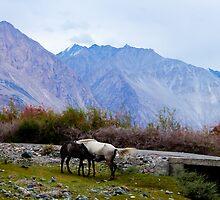 landscape at nubra valley, jammu and kashmir , India by Samar Kumar