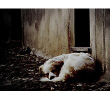 Deep Sleep Photographic Print