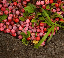 Plums and Asphalt by Nicoras Calin