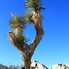 Joshua Tree National Park, California by ACBPhotos