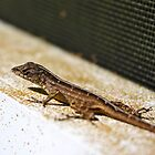 Lizard by ACBPhotos