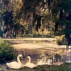 Geese lounging on the pond shore, Wilmington NC by Jennifer Westmoreland