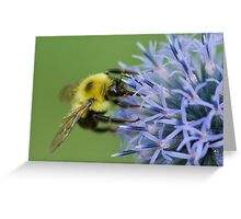 Bumblebee on Globe Thistle. Greeting Card