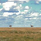Ostriches, Etosha, Namibia by opticallusion