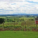 Yamhill Vineyard by Chrisdor