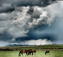 Summer Storms by Nikki  Taylor - Sydney Pet Photography