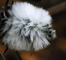 fluffy wild flower macro by BigAndRed