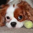 No, you can't have my ball. by Barbara  Glover