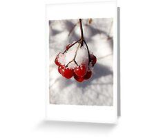 American Cranberries in Snow Greeting Card