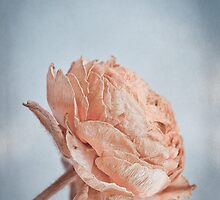 Dried Flower by ♛ VIAINA