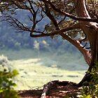Overlook Sentinel by RPAspey