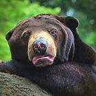 Gummy Bear by Jim  Egner