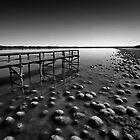 Lake Clifton Mono by AbbottPhotoArts