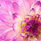 Pinkalicious by Celeste Mookherjee