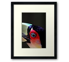 Red Breasted Toucan Portrait #2, at Iguassu, Brazil.  Framed Print